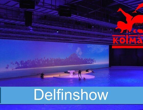 Delfinshow