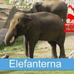 Elefanterna på Kolmården