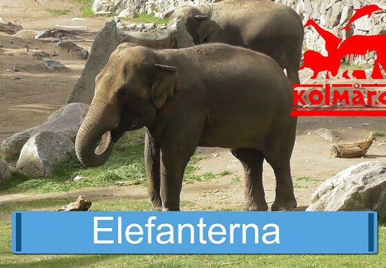 Elefanterna
